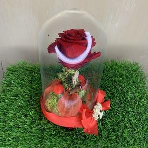 Rosa in campana di vetro