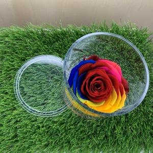 Rosa stabilizzata colorata