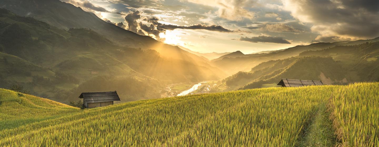 Green field near houses 2165688