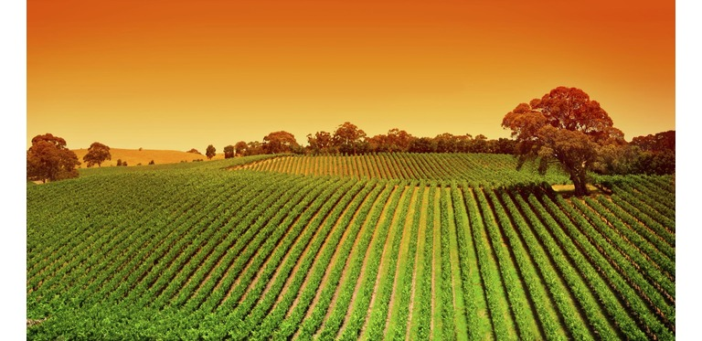 Agricoltura biologica 1