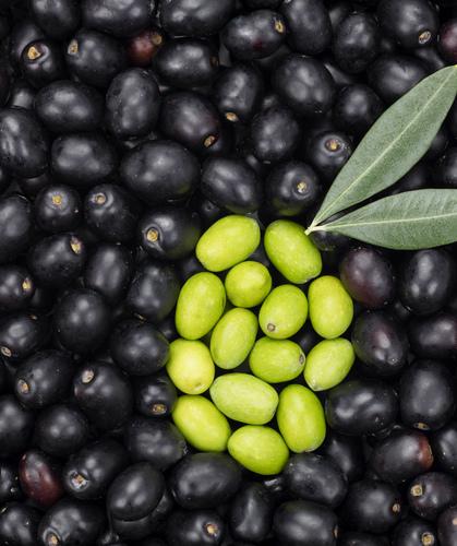 Green olive shape on black olive background fresh  pvvkt64