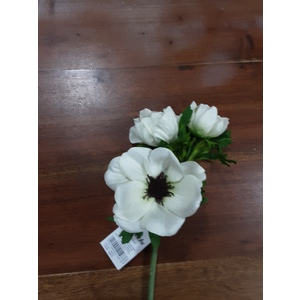 anemone  bianco