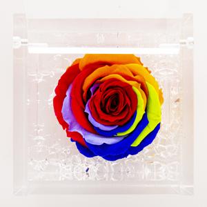 Rosa stabilizzata arcobaleno