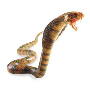 Recur Cobra Reale L 79