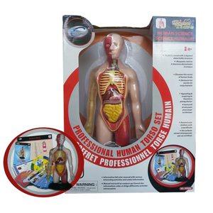 Corpo Umano Modellino Professionale