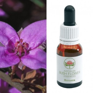 Boronia 15 ml Bush Flower essence