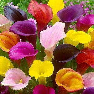 Kèrastase (200ml) fragranza per Ambiente resistance