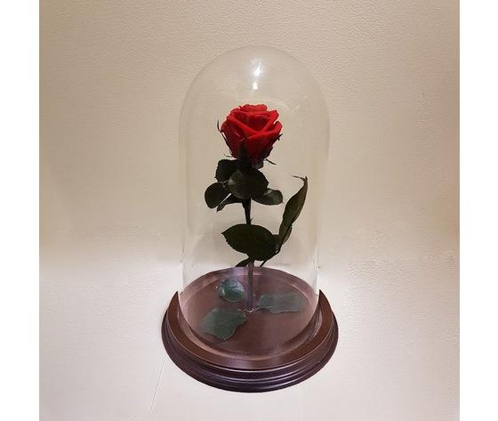 Rosa stabilizzata in teca di vetro 100%e2%82%ac  ma012
