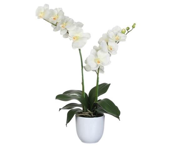 Orchidea 2 rami 40%e2%82%ac   ma026