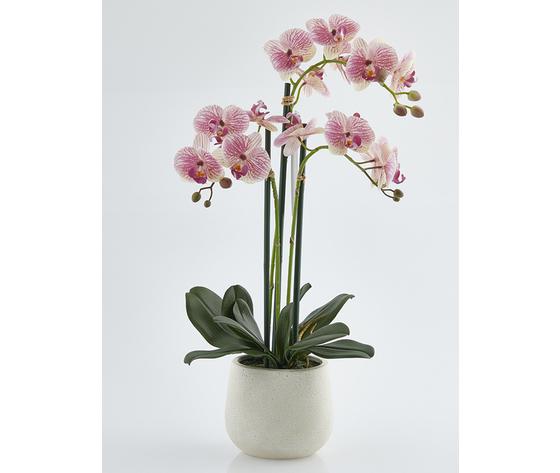 Orchidea 3 rami 60%e2%82%ac   ma027