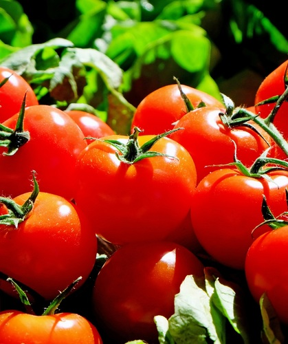 Plant fruit food red produce vegetable market tomato tomatoes frisch flowering plant land plant potato and tomato genus 1221993