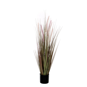 Dogtail Grass purple in plastic pot d15cm - h120cm