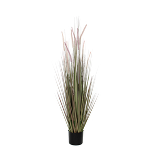 Dogtail Grass purple in plastic pot d17cm - 150cm