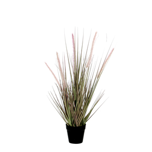 Dogtail Grass purple in plastic pot d10cm - h53cm