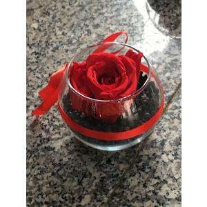 Rosa stablizzata - bowl vetro