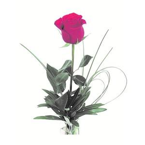 Rosa rossa  confezionata