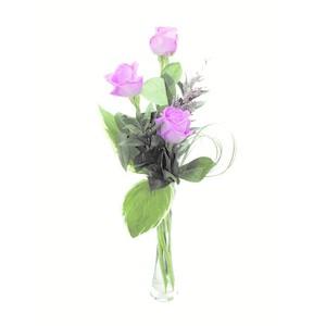 Rose rosa confezionate