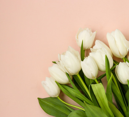 Fresh white tulips 768343