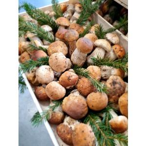 Funghi porcini freschi EDULIS