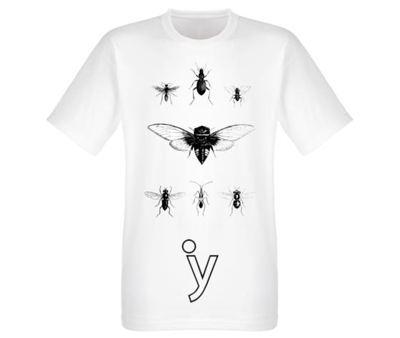 Anatomie insetti 2