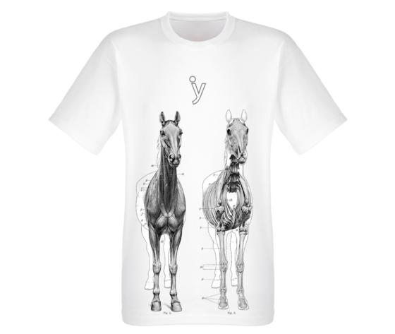 Anatomie cavalli 2