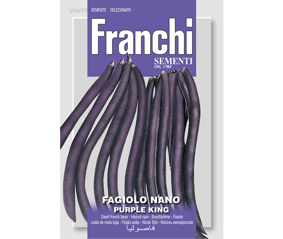 Fagiolo nano purple king