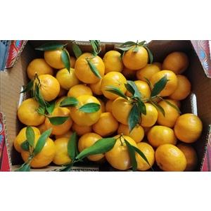 mandarino Tardivo ciaculli cassetta da