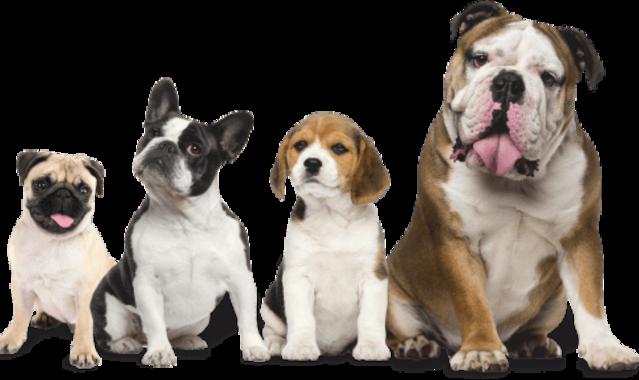 Dagel dogs alimentazione cani professionali