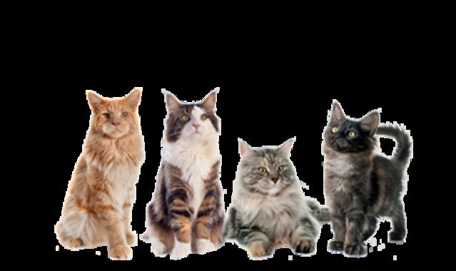 Gatti prodotti offerte francavilla