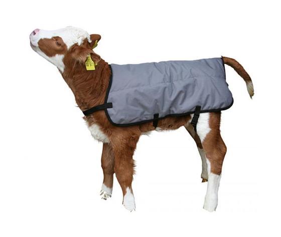 Coperta ripstopp termica per vitelli