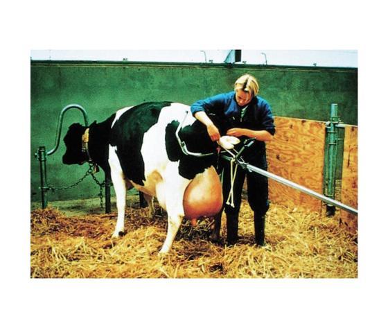 Estrattore per vitelli vink %281%29