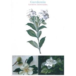 GARDENIA- OLIO ESSENZIALE AROMACOLOGY 5 ML