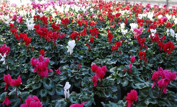Banner piante fiorite
