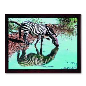 Thermoquadro Innovation Zebra