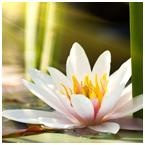 Oggetti e corredi rituali buddisti